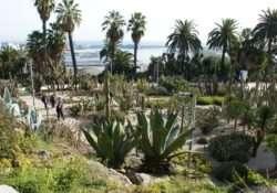 Gardens of Montjuic - Cactus Gardens - Barcelona - Spain