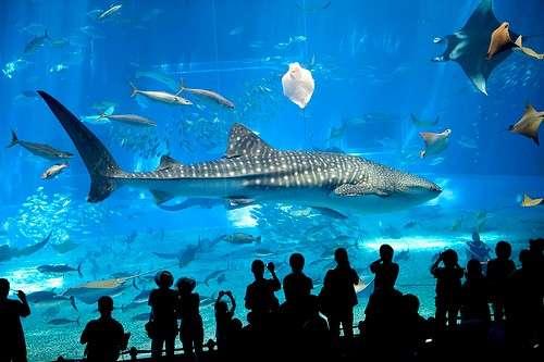 barcelona-aquarium